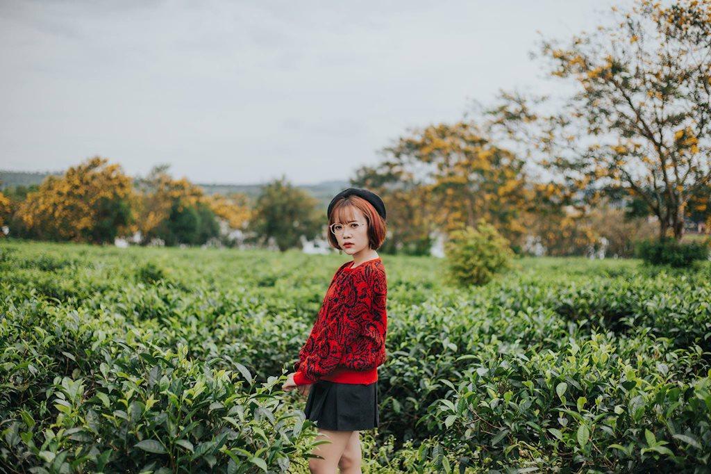 9x Gia Lai thả dáng giữa rừng hoa muồng vàng